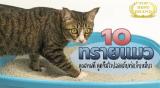 เอาใจทาสแมวด้วย 10 แบรนด์ทรายแมวคุณภาพดี ดูดซึมไวปลอดภัยต่อเจ้าเหมียว 2021
